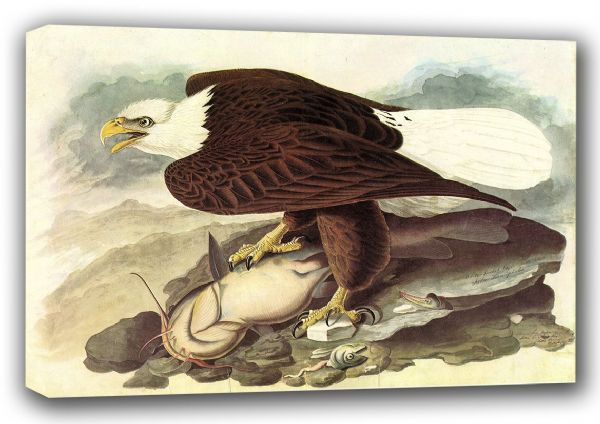 Audubon, John James: Bald Eagle. (Ornothology/Bird) Fine Art Canvas. Sizes: A3/A2/A1 (001007)